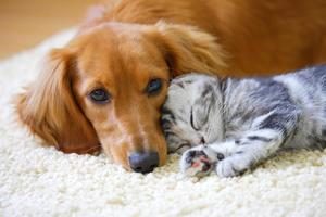 ペットの熱中症.jpg